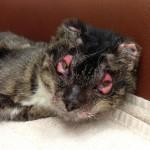 Dutchess Burned Kitty: Better and Better