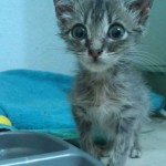 Waffle, Kitten Nursed Back to Health: A Story in Photos
