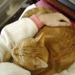 Best of Craigslist: Help Wanted, Feline Lap Surrogate
