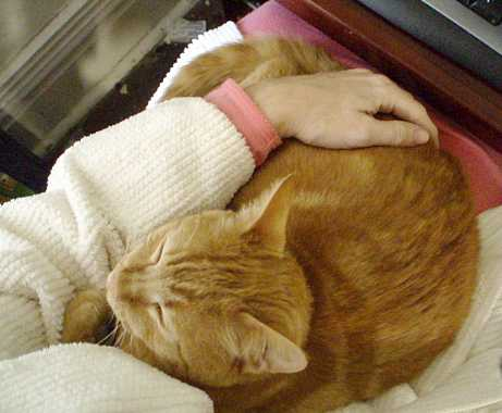 Best of Craigslist: Help Wanted, Feline Lap Surrogate - Life With Cats
