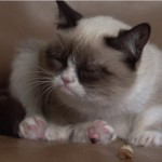STORYBOARD: Tard the Grumpy Cat Interview