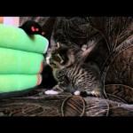 Young Kitten Nikita – First Days