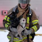 Firefighters Rescue Cat From Massive Blaze