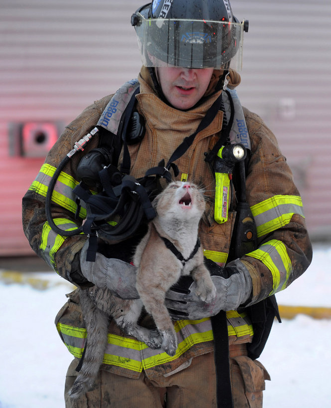 Cat Rescue Anchorage