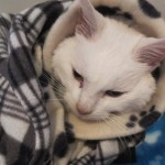 Destiny, Rescued From Freezing and Getting Help