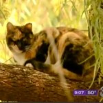 Woman Feeding Ferals Fears for Her Life After Seeing HOA Email