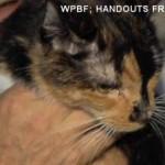 Lost Cat Walks 190 Miles Home
