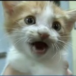 Freezer Kitten Tuffy Gets a Special Home