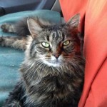 Truck Driver Reunited with Cat Lost When Rig Was Stolen