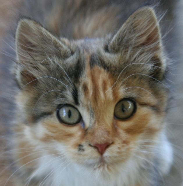Least Allergenic Food For Cats