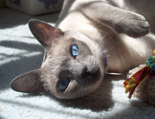 cat litter and pregnancy risks