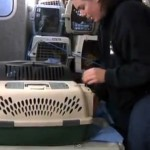 161 Cats Removed From CO Woman's Home in Group Effort by Rescue Groups