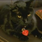Scout's Happy Tail: Cat Reunited  With His Family After 7 Years
