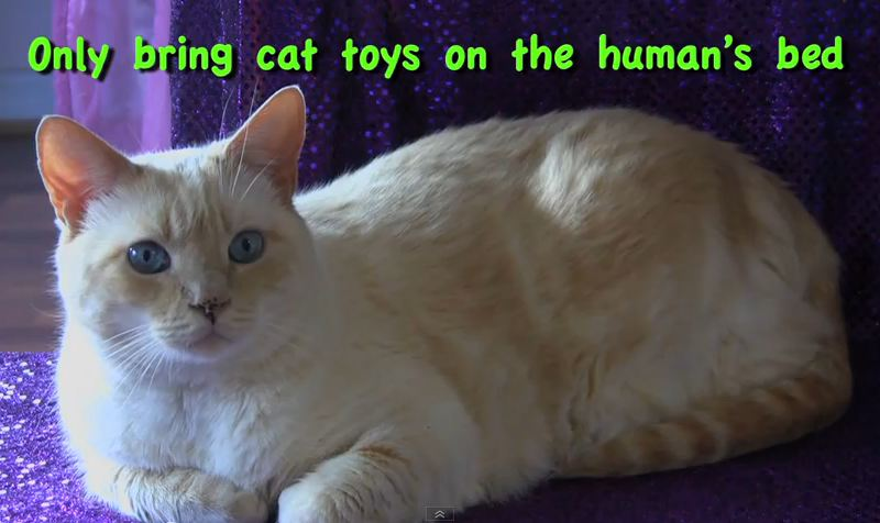 Cats New Years Resolutions 2013 – Furball Fables