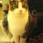 Loyal Cat Visits Guardian's Grave