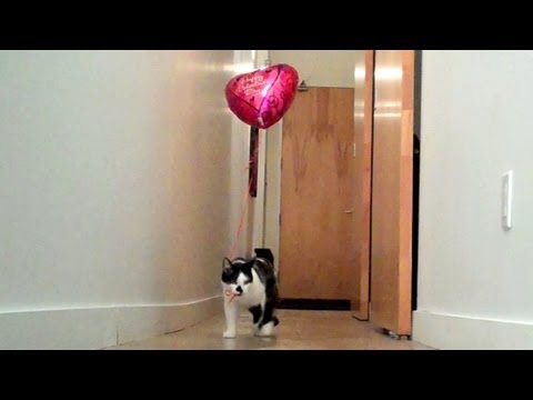 The Balloon, with Shorty and Kodi