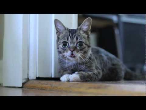Lil Lil BUB – BUB as a Kitten