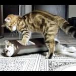 Ninja Kittens and the Box