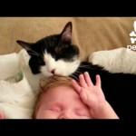 Cat Gives Baby a Tongue Bath