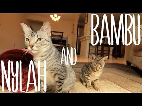 Nylah & Bambu