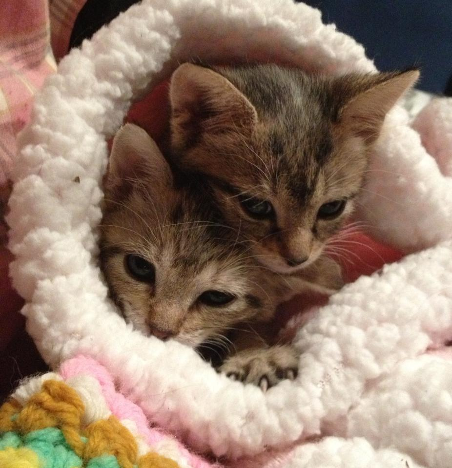 Hope, Faith and Happy: Mama Cat and 2 Kittens Survive Tragic Dumping in Freezing Cold