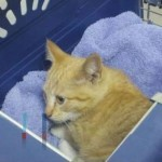 Felony Cruelty Charge for Man Who Shot Cat and Laughed When Admitting it to Deputies