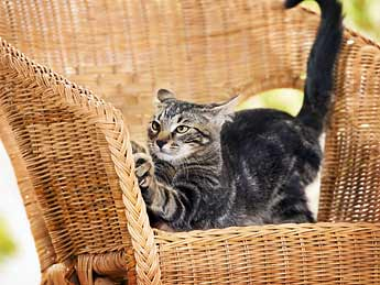 Stop Cats Scratching Chair