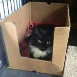 Cleo – Tramatized Kitty Needs a Loving Home Where She Can Heal