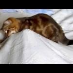 Kitten vs Scary Ghost