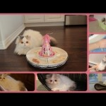 Marshmallow Kitty's 1st Birthday with Cuteness Recap