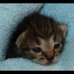 Family Rescues Newborn Kitten Trapped Under Porch