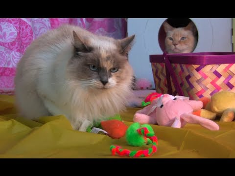 How to Make An Easter Basket for Cats – Furball Fables