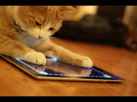 Animals Playing On iPads Compilation