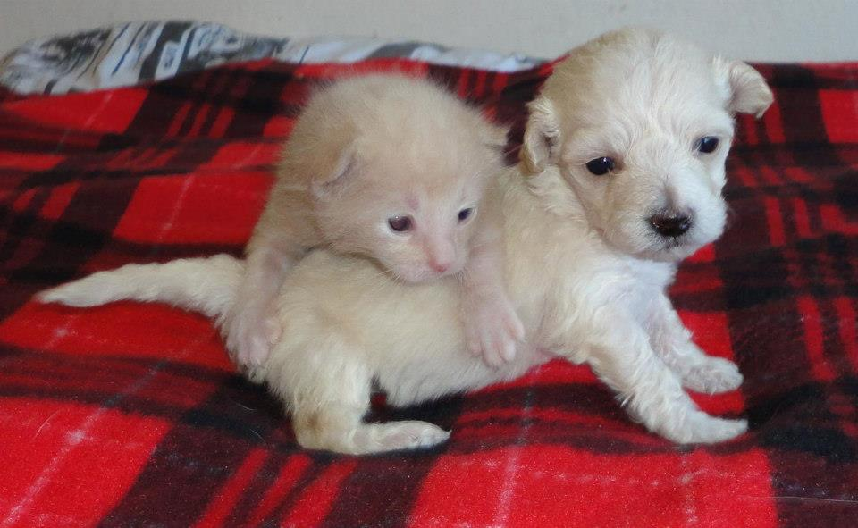 Lacey and Cocopuff: Orphaned Puppy and Kitten Are Loving Companions