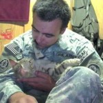 Cat Who Restored a Soldier's Hope Travels From Afghanistan to the US