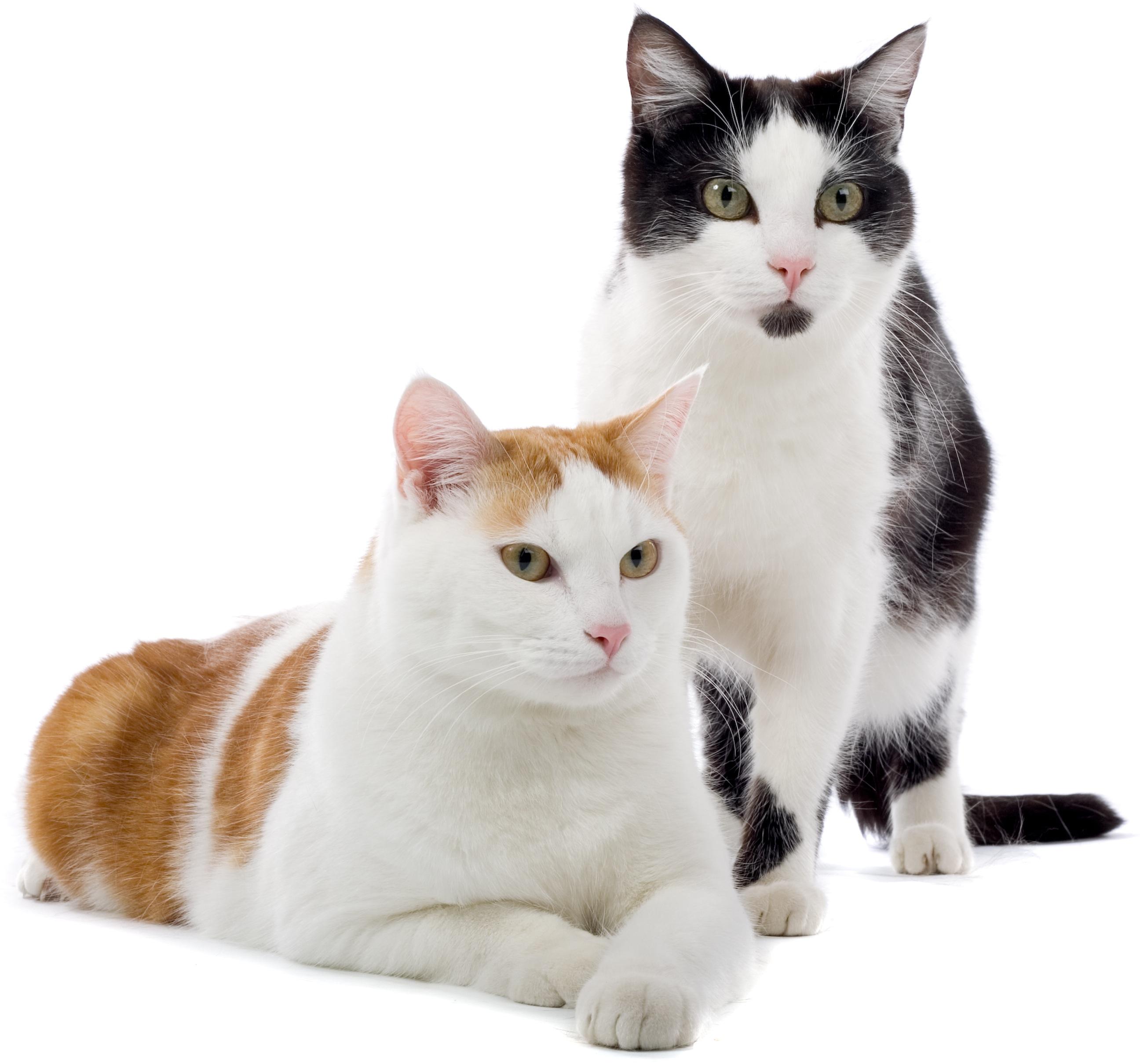 Cat Dog Food Blind