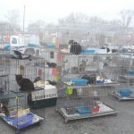 Animal Lovers Help 225 Cats and Dogs After Shelter Fire