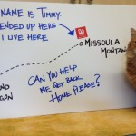 Long Lost Cat Timmy Gets Ride 550 Miles Back Home