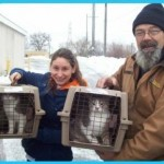 Bus Driver Rescues Two Cats Susbisting on Scraps in the Freezing Cold