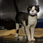 Cat Found Bound and Burned is Recovering