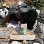Piper the Belt Line Cat