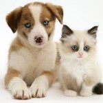 Chicago's Oldest Pet Shop to Stop Selling Kitten and Puppy Mill Pets