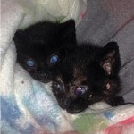 Thelma and Louise: Kittens Rescued From Storm Drain