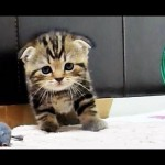 Enthusiastic Kitten's Chirping