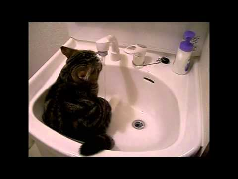 Then and Now: Maru at the Sink