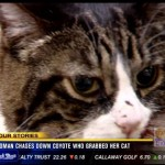 Woman Chases Coyote to Save Her Cat
