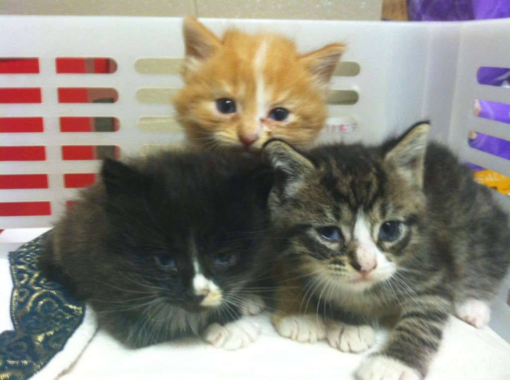 "Firefighters Rescue ""Pool Table Kittens"" at Scene of Fire"