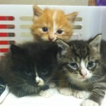 """Firefighters Rescue """"Pool Table Kittens"""" at Scene of Fire"""