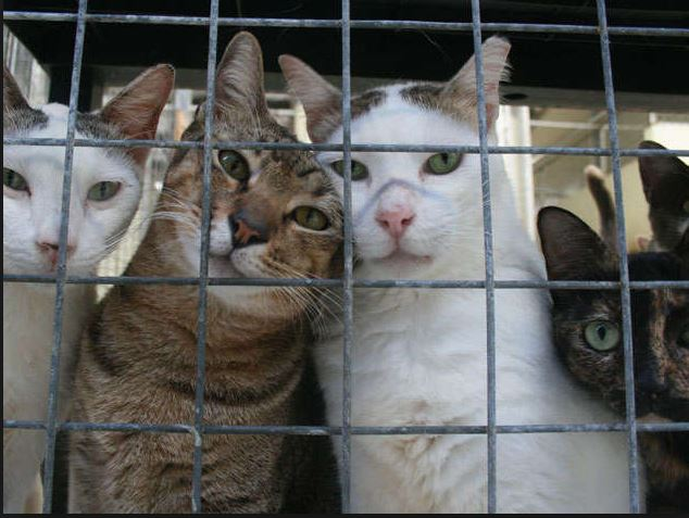 How Much To Adopt A Cat From Humane Society
