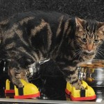 Cat Gets Heatproof Boots After Jumping on Hot Stove